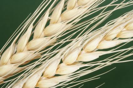 Alergia na mąkę