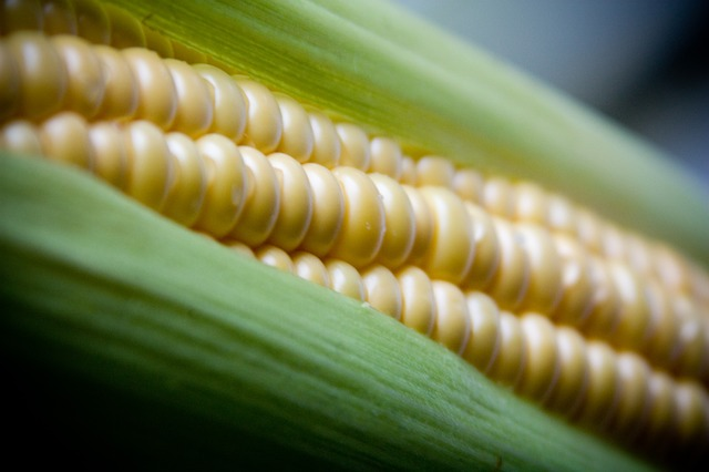 alergia-na-kukurydzę