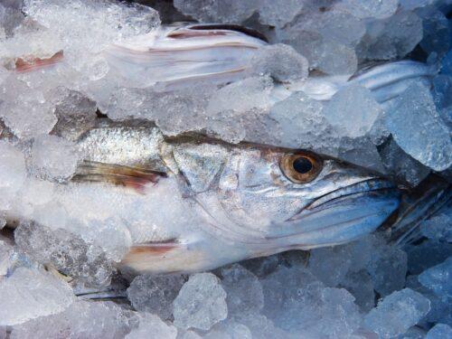 Ryby dla niemowląt