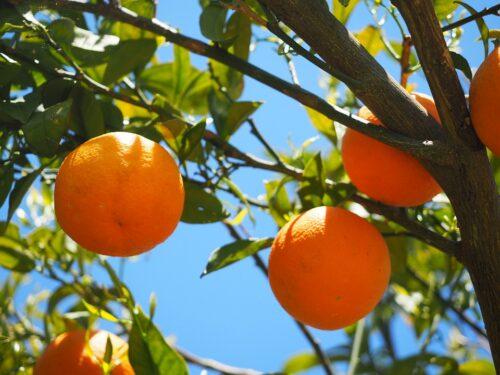 alergia na pomarańcze