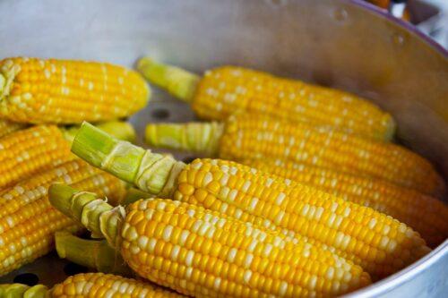 Kukurydza pod lupą