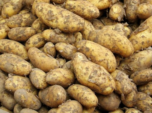Dlaczego warto jeść młode ziemniaki?